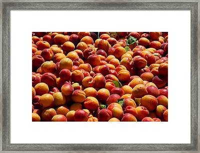 Nectarines For Sale At Weekly Market Framed Print by Panoramic Images