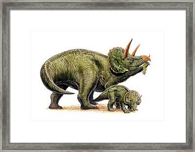 Nedoceratops Dinosaurs Framed Print by Deagostini/uig