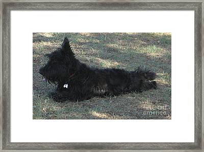 Need A Rest Framed Print by Theresa Davis