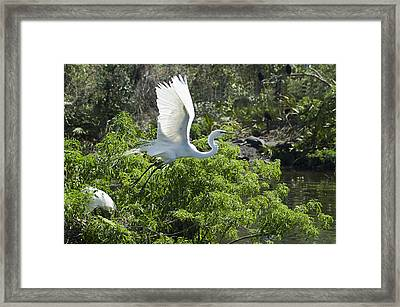 Need More Branches Framed Print