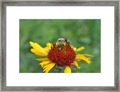 Need More Pollen Framed Print