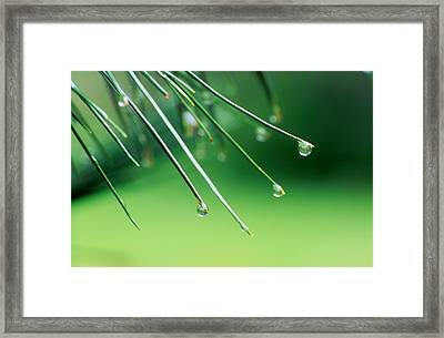 Needles Framed Print by Ken Dietz