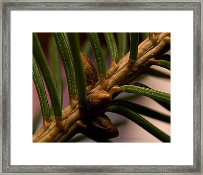 Framed Print featuring the photograph Needlescape 5 by WB Johnston