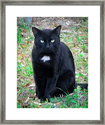 Needs A Home Framed Print by Christy Usilton