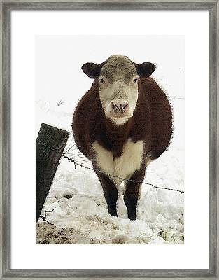 Neighbor's Cow Framed Print