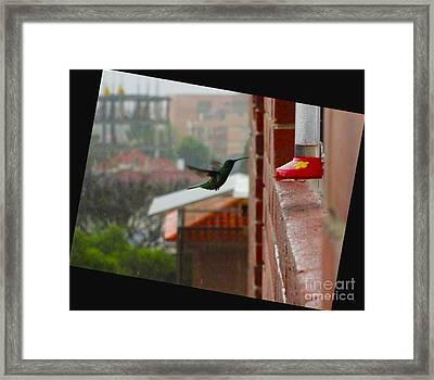 Neither Rain Nor Sleet  Framed Print by Al Bourassa