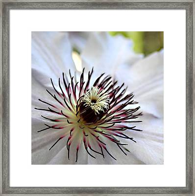 Nellie Moser On Her Best Behavior Fine Art Print Framed Print