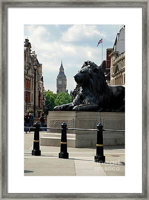 Nelson's Lion Framed Print