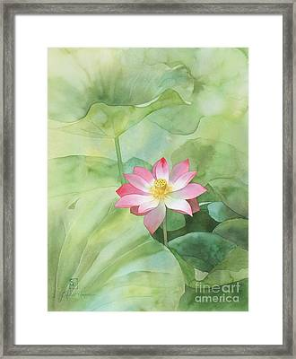 Nelumbo Framed Print by Robert Hooper