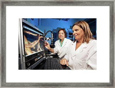 Nematode Research Framed Print by Stephen Ausmus/us Department Of Agriculture
