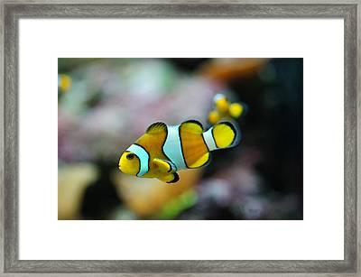 Nemo From Barcelona Framed Print by Stephan Yankov
