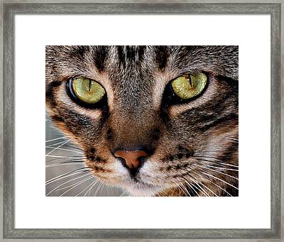 I See You Framed Print by Jennifer Muller