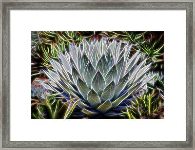 Neon Agave Parryi Framed Print