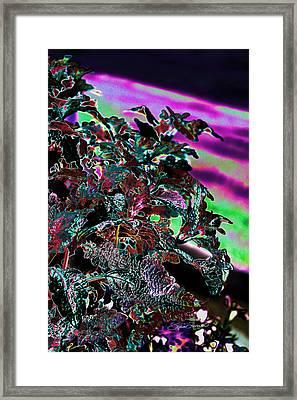 Neon Coleus Framed Print