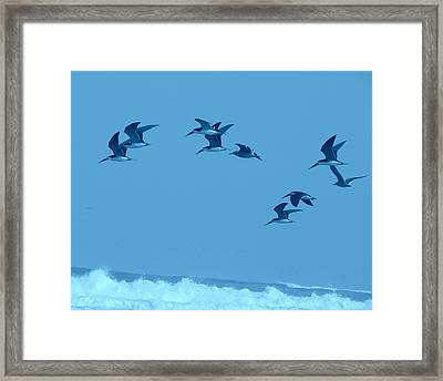 Neon Flight Framed Print by Lew Davis