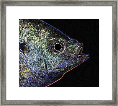 Neon Gill Framed Print by John Crothers