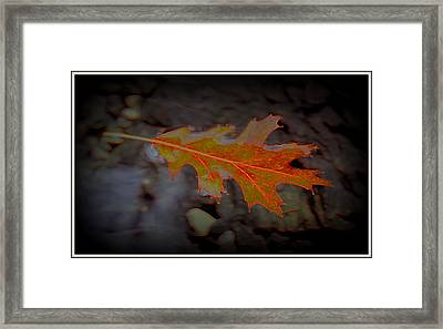 Neon Leaf Afloat Framed Print by Greg Thiemeyer