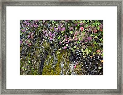 Neon Leaves No 1 Framed Print