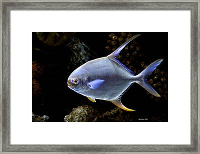 Neon Ned Framed Print by Dick Botkin