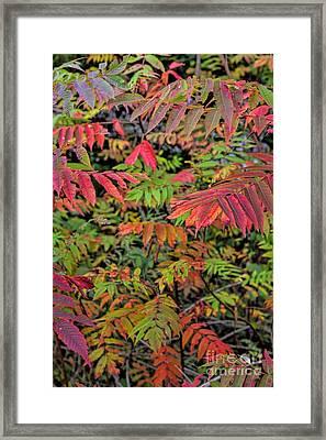 Neon Sumac - Autumn Framed Print
