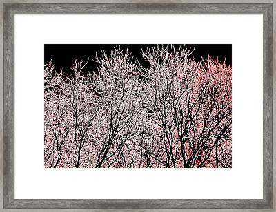 Neon Trees One Framed Print by A K Dayton