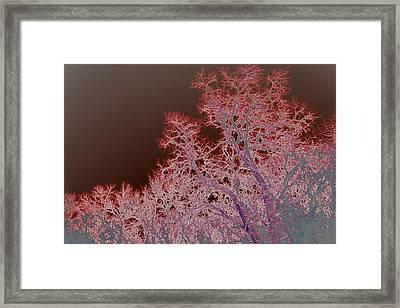 Neon Trees Three Framed Print by A K Dayton