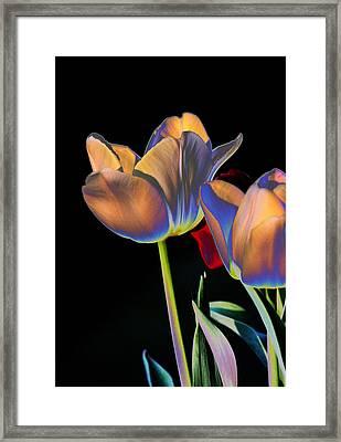 Neon Tulips Framed Print