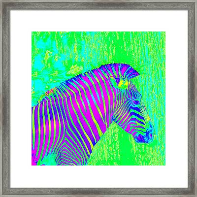 Neon Zebra 2 Framed Print by Jane Schnetlage