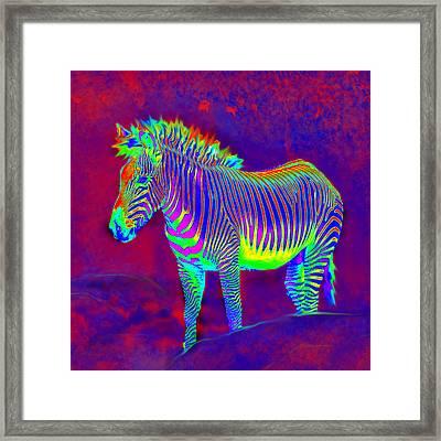 Neon Zebra Framed Print by Jane Schnetlage