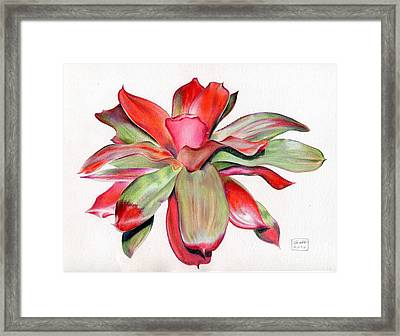Neoregelia 'magali' Framed Print by Penrith Goff
