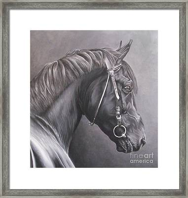 Nero 2 Framed Print by Pauline Sharp