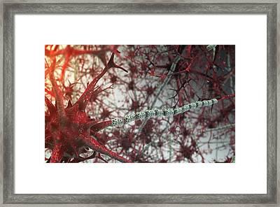 Nerve Cells Framed Print