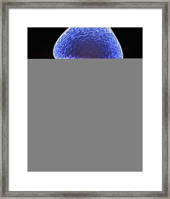 Nerve Synapse And Serotonin Molecule Framed Print by Science Photo Library