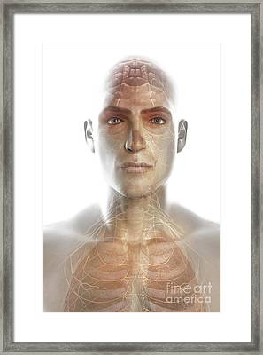 Nerves Of The Head And Neck Framed Print