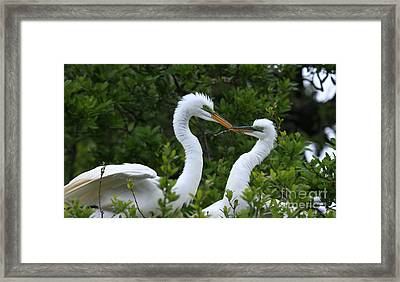Framed Print featuring the photograph Nest Building by John F Tsumas