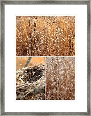 Nest Field Framed Print