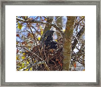 Nest Frag Framed Print by Al Powell Photography USA