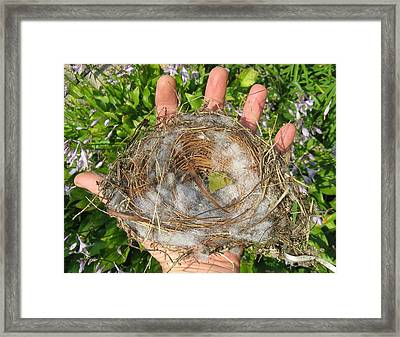 A Nest In Hand Framed Print by Bruce Carpenter