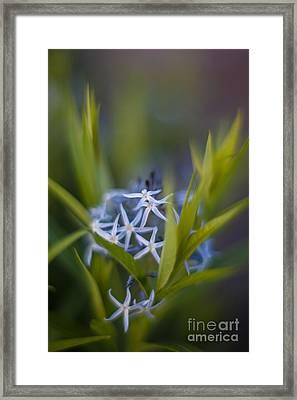 Nest Of Blue Stars Framed Print by Mike Reid