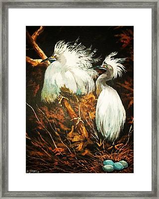 Nesting Egrets Framed Print by Al Brown