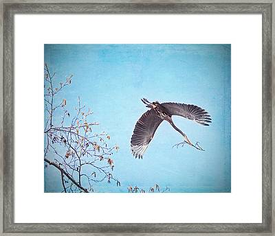 Framed Print featuring the photograph Nesting Heron by Peggy Collins