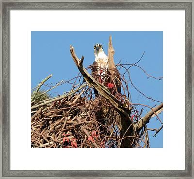 Nesting Framed Print by Julie Cameron