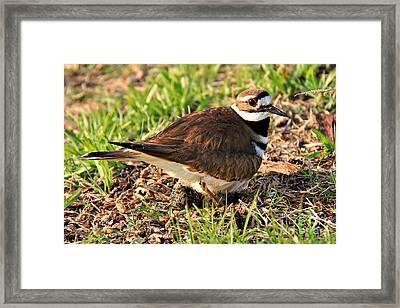 Nesting Peak Framed Print by Leslie Kirk