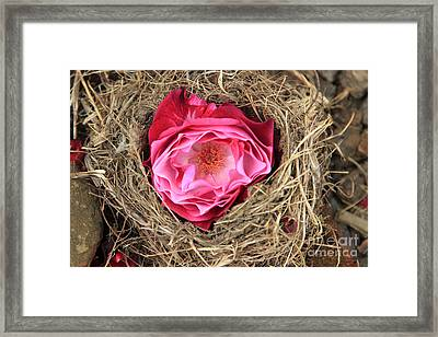 Nesting Rose Framed Print by Jeanette French