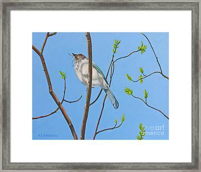 Nesting Scrub Jay Framed Print