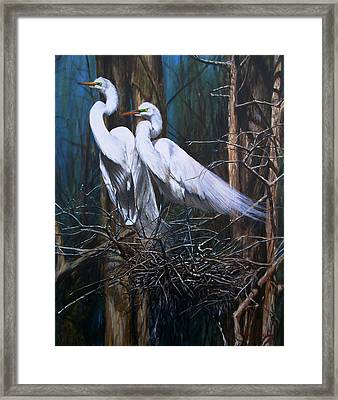 Nesting Snowy Egrets Framed Print by Rob Dreyer