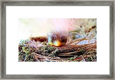 Nesting Sweetness Framed Print by Art Dingo
