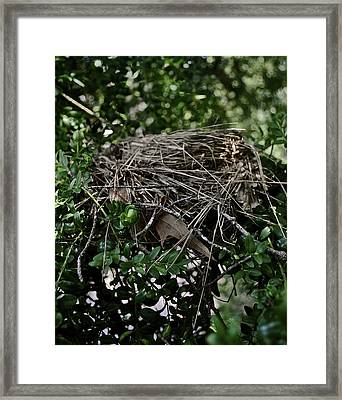 Nestled At Home Framed Print by Brynn Ditsche