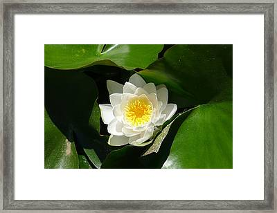 Nestled-in-leaves Framed Print