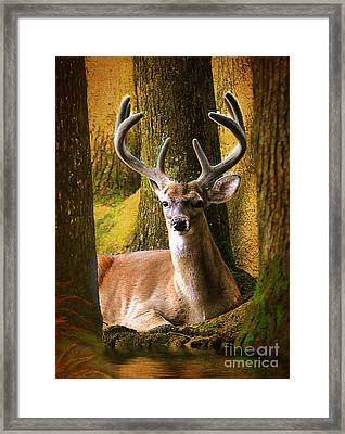 Nestled In The Woods Framed Print by Kathy Baccari